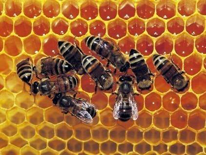 Honey | Bear Country Bees