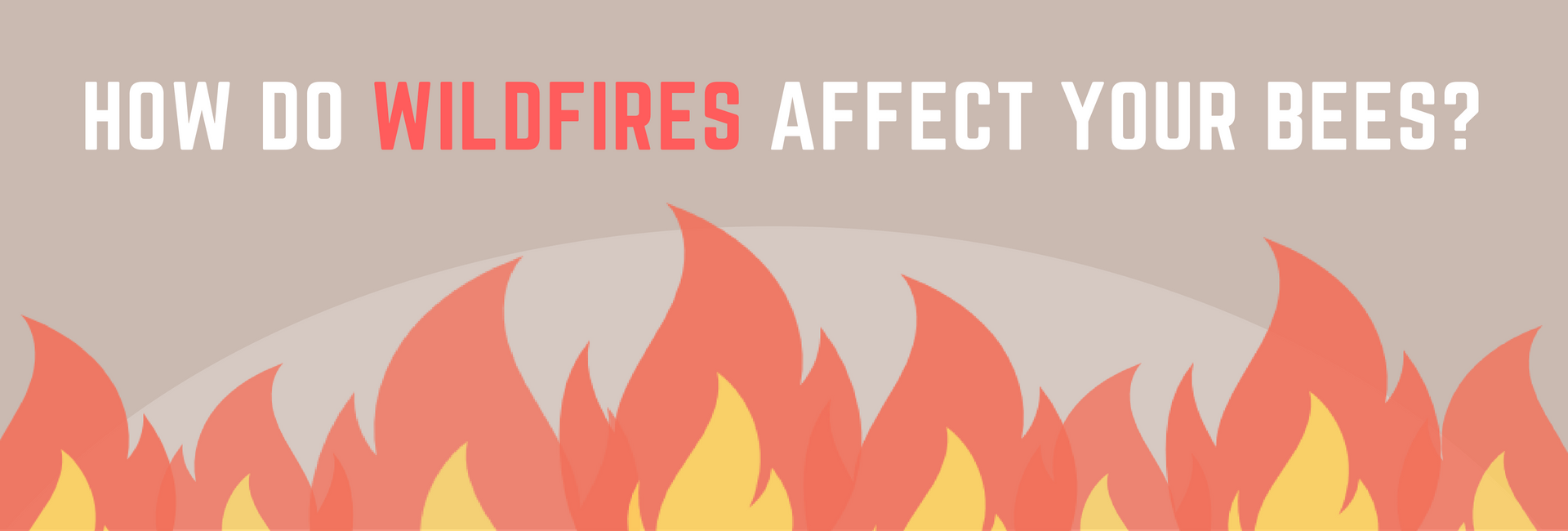 How Do Wildfires Affect Your Bees?