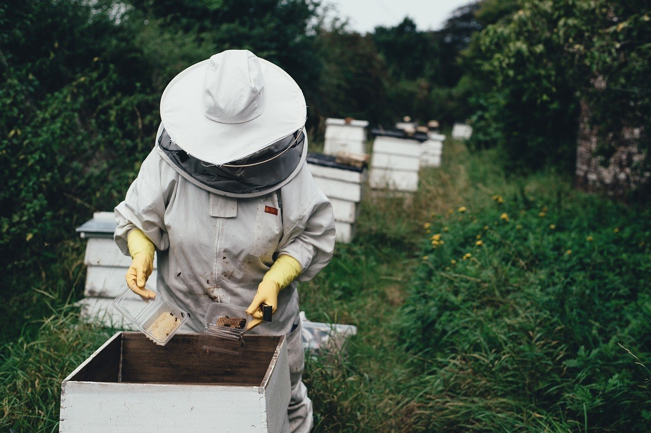 Adopt-A-Hive Update Letter - April 2019