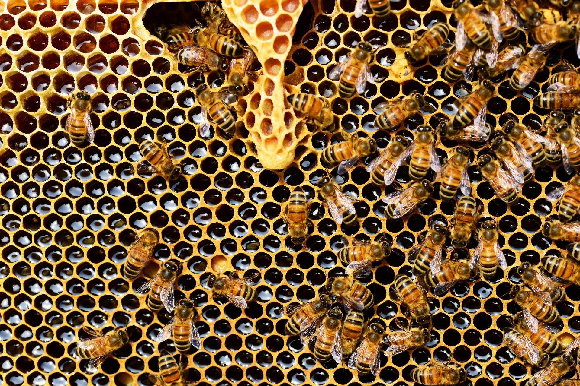 Adopt-A-Hive Update Letter - January 2019