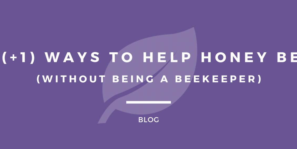 10 (+1) Ways To Help Honey Bees Without Being A Beekeeper - Featured Image