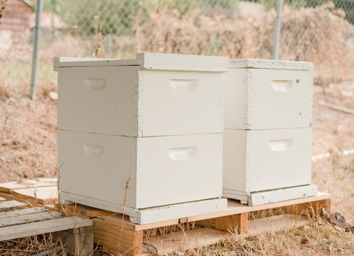 Smokey Outside - October 2019 Adopt-A-Hive Update Letter - Bear Country Bees