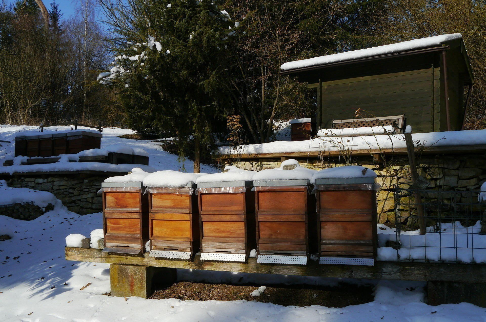 Adopt-A-Hive Update Letter - October 2019 - Bear Country Bees