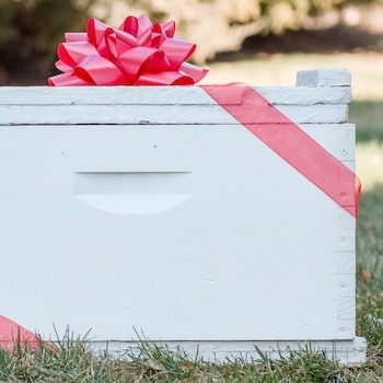 Adopt-A-Hive Gift - Bear Country Bees