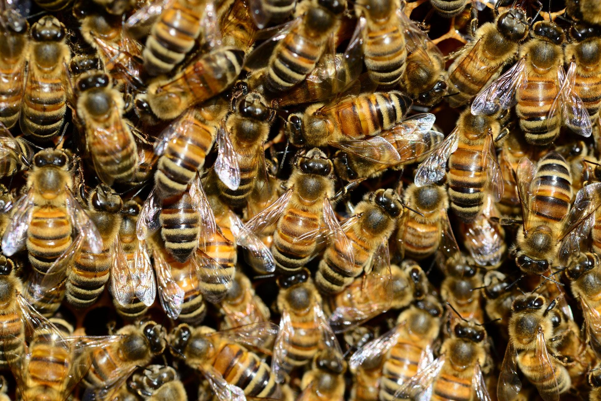 Adopt-A-Hive Update Letter - January 2020 - Bear Country Bees