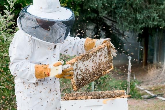 Learn To Be A Beekeeper - Backyard Beekeeping Launchpad