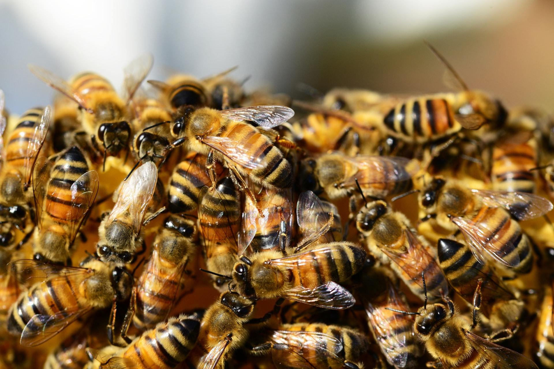 April 2020 Update Letter - Adopt-A-Hive - Bear Country Bees