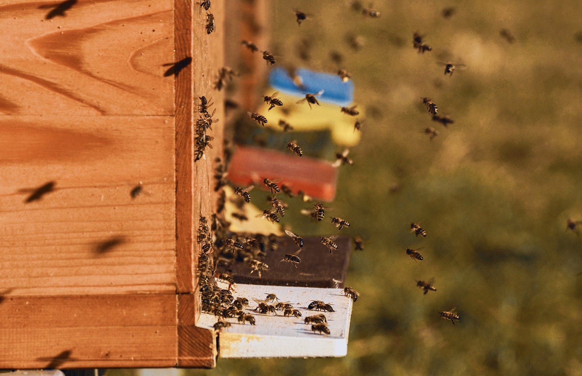 January 2021 - Adopt-A-Hive Update - The Cost of Beekeeping