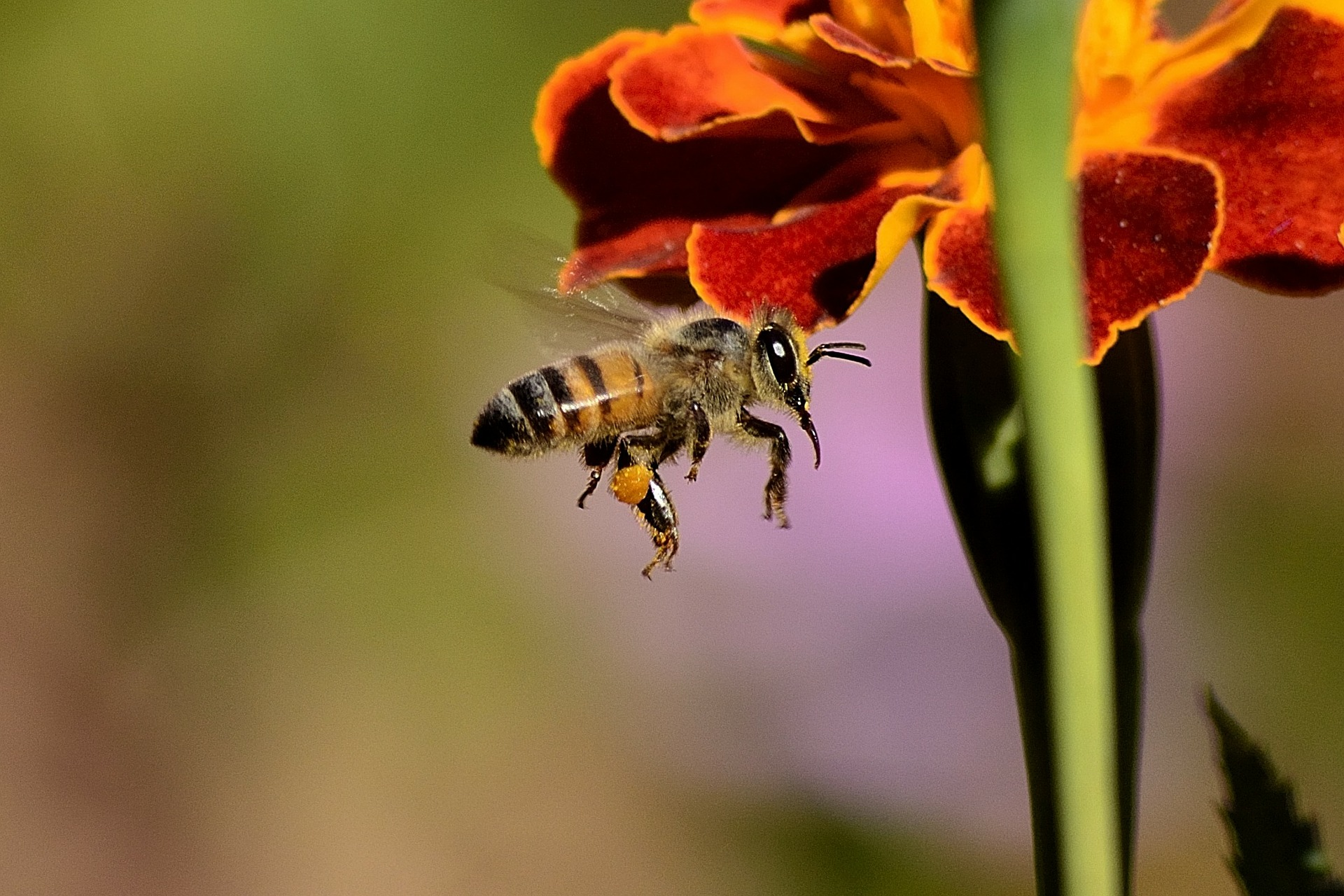 July 2021 - Adopt-A-Hive Update - Honey Bee Foraging